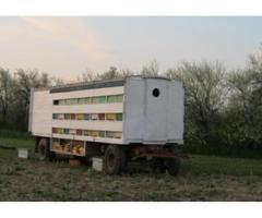 Pavilion apicol inmatriculat