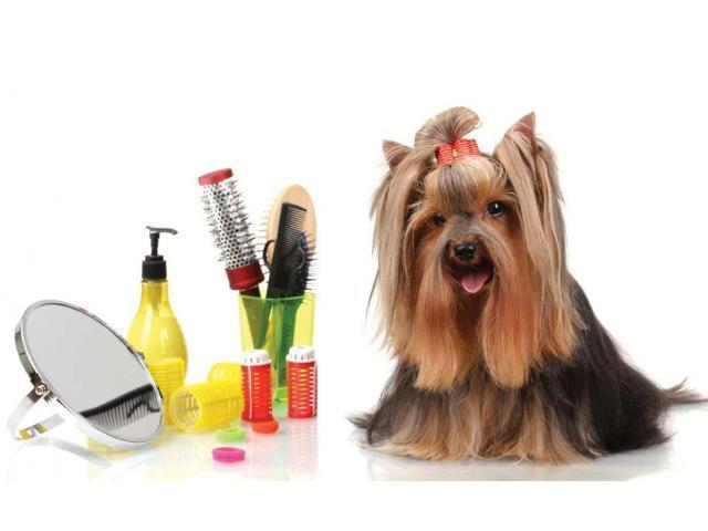 Cosmetica canina si felina la domiciliu - 1/1