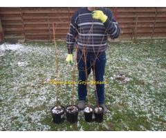Pepiniera Goji Brasov - plante de calitate