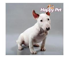 Vand bullterrier B BV IS CT GL CJ TM CV SM