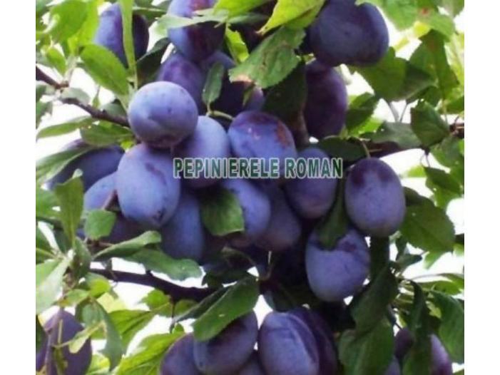 Pomi fructiferi altoiti Certificati - 2/3