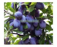 Pomi fructiferi altoiti Certificati