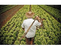 Angajez ajutor agricultor Germania
