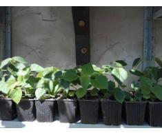 vand plante
