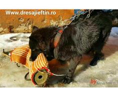 Dresaj canin Preturi mici pentru companionul tau