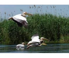 Excursii si cazare in Delta Dunarii