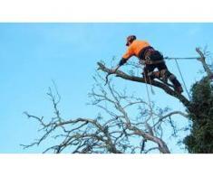 taiere arbori periculosi in zone aglomerate de cabluri si cladiri