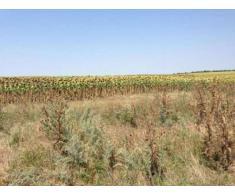 Vand terenuri extravilane la Nuntasi si Corbu- ie