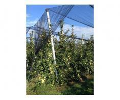 infiintam plantatii pomicole cu inalta tehnologie
