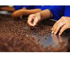 Fabrica de cafea Germania cauta!