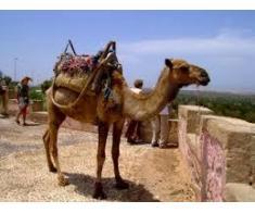 bun venit în Maroc