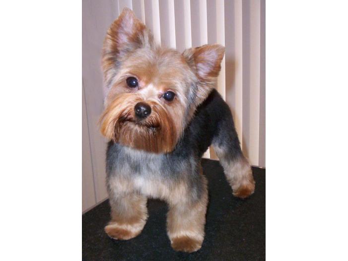 Frizerie Canina Si Felinala Domiciliul Clientului Bucuresti Sector