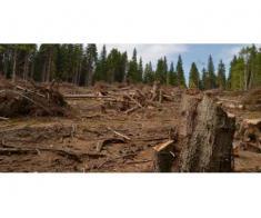 Defrisare terenurior degradate