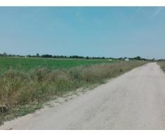 Teren 6.015,15 mp, Str Salciei, Domnesti, Judet Ilfov