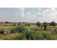 Teren intravilan 30900 mp, sat Livada, Arad