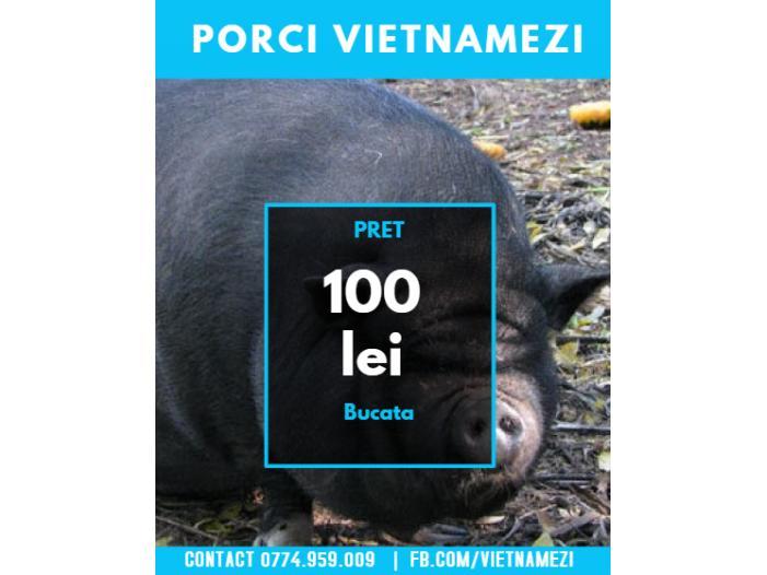 Vand Purcei Vietnamezi - 3/4