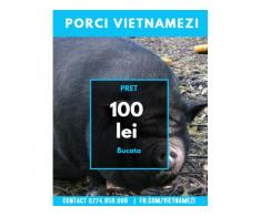 Vand Purcei Vietnamezi - Poza 3/4