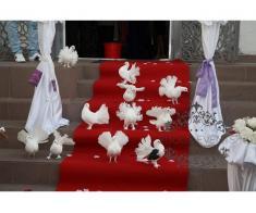 Porumbei albi nunta Constanta  0762838354